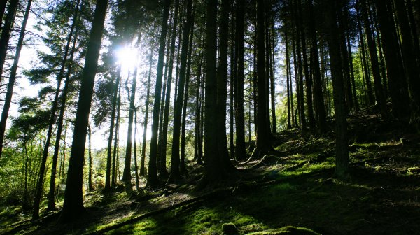 Walk your dog through beautiful Grizedale Forest